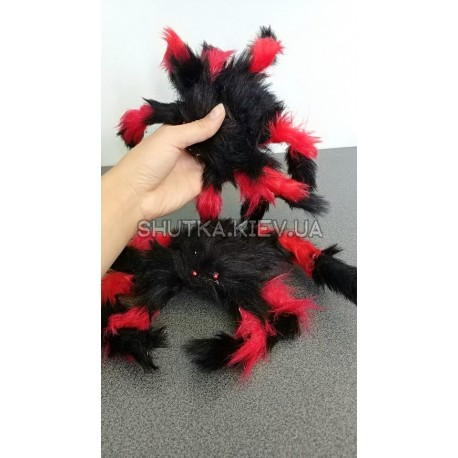 Пушистый паук фото 1 — Shutka