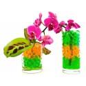 Оригинальные растения и вазы